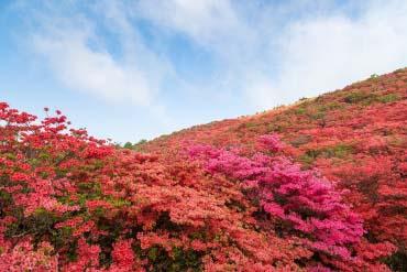 葛城高原(奈良)