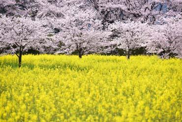 藤原宮跡(奈良)
