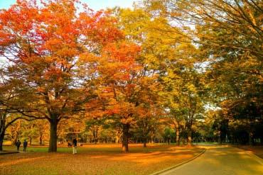 代代木公園(東京)