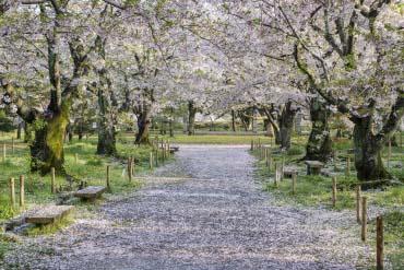 舞鶴公園(福岡・博多)
