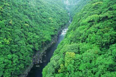 谷川美久电影_鹿儿岛 作为宫崎骏的电影《幽灵公主》的舞台而出名的屋久岛.