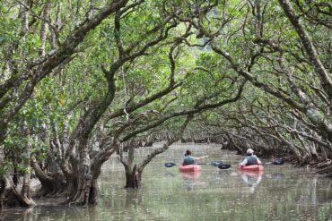 紅樹原生林