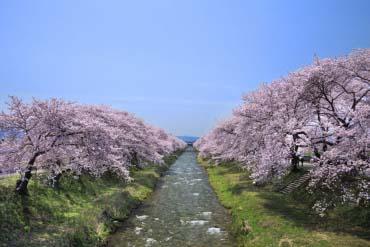 朝日町・舟川beli(富山・黑部・立山)