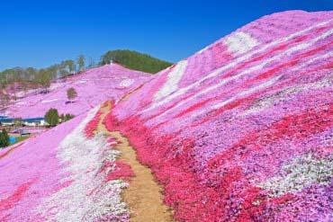 东藻琴芝樱公园(北海道的其他景区)