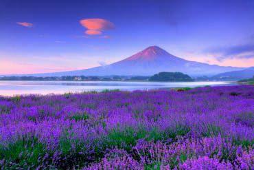 河口湖大石公園(富士山)