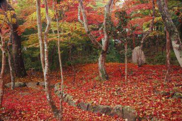 Zuiho-ji Park