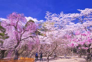 懐古園(長野)