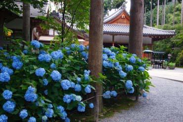 Sanzen-in Temple(Kyoto)