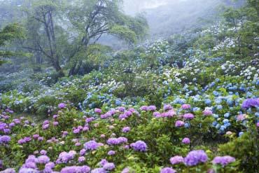 美の山公園(埼玉)