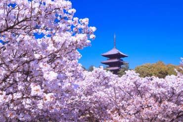 仁和寺(京都)