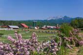 Hiruzen-kogen Highlands