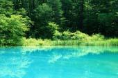Swamp of five colors