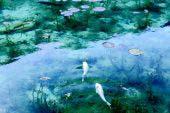 名もなき池(通称 モネの池)
