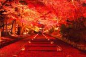 Bishamondo with red leaves of autumn