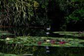 Monet's Garden
