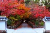 Kosho-ji Temple