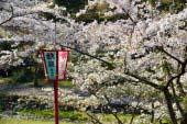 Yoro Park