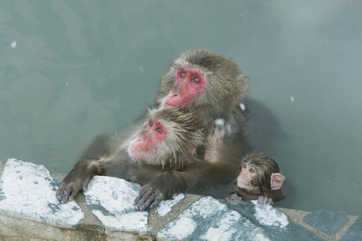 Hakodate Monkey Mountain
